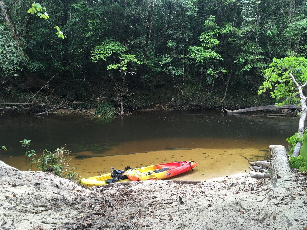 Crique Anguille Kayak